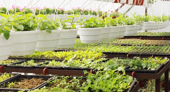 Питомники рассады и растений 92